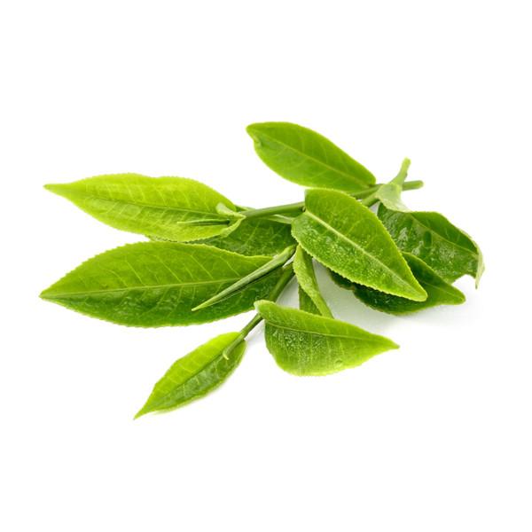 Чайное дерево (эфирное масло)