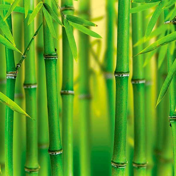 Экстракт бамбука