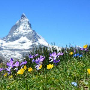 Отдушка «Альпийский луг»